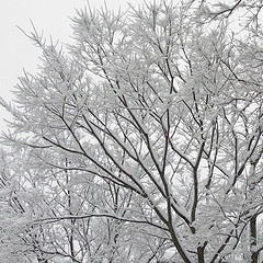 関金温泉雪景色 / e_s_jp